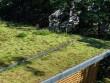 Une toiture végétalisée où la nature reprend ses droits