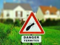 Termites : les conseils de Sentri-tech