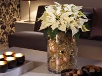 Trois idées pour donner un air de fête à ses pots de fleurs