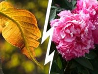Hommes vs femmes : au jardin aussi, les clichés ont la peau dure