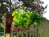 Créez votre mini potager aromatique