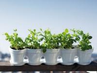 Dix conseils pour prendre soin de ses plantes pendant les vacances