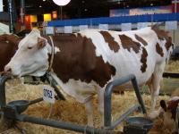 Pets et bouses de vache, au secours de l'environnement