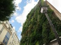 L'oasis d'Aboukir, un mur végétal de 250 m2 en plein coeur de Paris