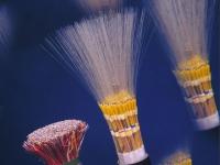 Tout savoir sur la fibre optique : le très haut débit en détails