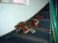La mérule, un fléau domestique mal connu
