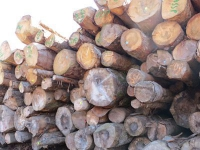 Un texte de loi pour soutenir la forêt et lutter contre l'importation de bois illégal