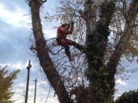 Du propriétaire ou du locataire, qui doit faire élaguer les arbres ?
