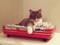 Aristide : un palace pour chats