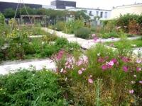Un jardin solidaire sur un toit parisien