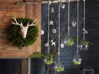 Noël : des cadeaux végétaux pour les amoureux des plantes