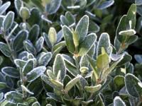 Protéger son jardin du froid et du gel : les bons réflexes à adopter