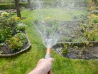 Canicule : les bons gestes pour sauver vos plantes