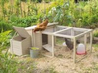 Réduction des déchets : Et si vous adoptiez une poule ?