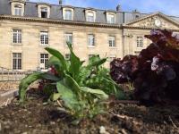 Paris expérimente le potager du toit