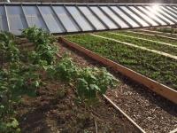 Agriculture urbaine : Paris encore loin d'exploiter son potentiel