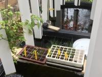 My food, une serre connectée pour cultiver ses fruits et légumes à distance