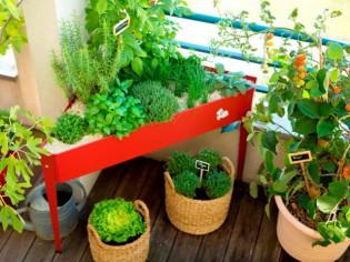 Jardiner en ville : que faire pousser sur un balcon ?