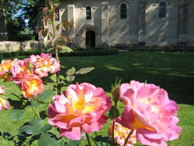 """La rose """"Prieuré de Saint-Cosme, demeure de Ronsard"""" - Prieuré de Saint-Cosme"""
