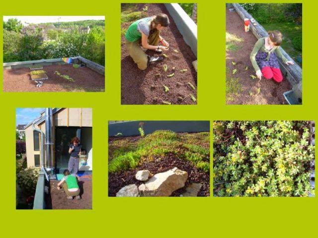 Etape 5 : Plantation 2/3 - Toit terrasse végétalisé - étape par étape