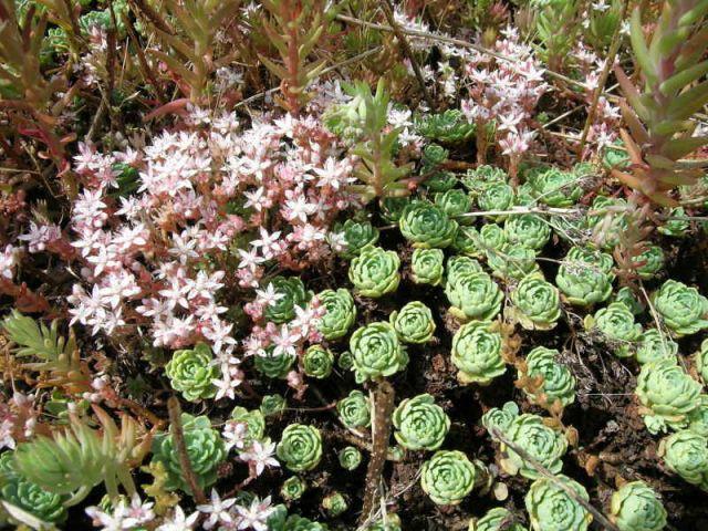 Etape 5 : Plantation 3/3 - Toit terrasse végétalisé - étape par étape