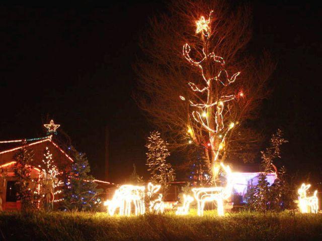 Les rennes - Noel maison illuminée 2010