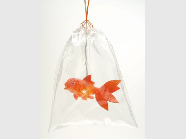 24 objets pour un bestiaire d co for Prix poisson rouge maxi zoo
