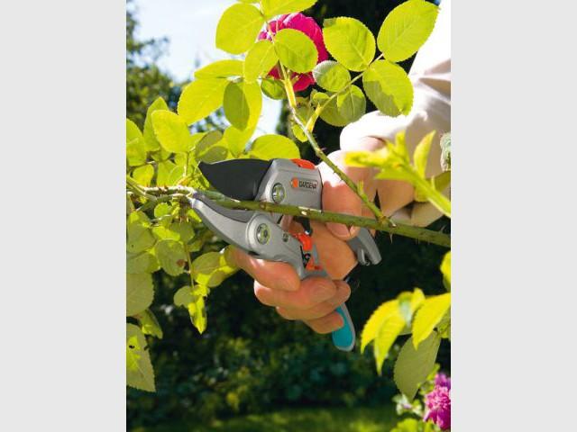 Les outils indispensables pour jardiner au printemps - Tailler les rosiers ...