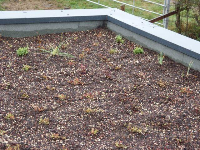 Une maison bois passive accessible tous maisonapart - Plante toiture vegetalisee ...