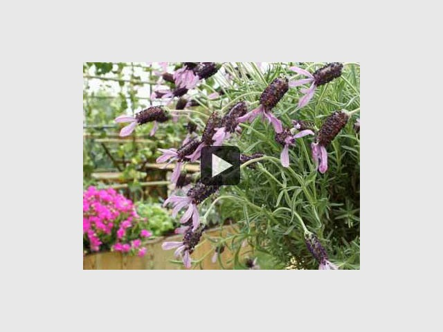 vegetaliser petits espaces - neopodia