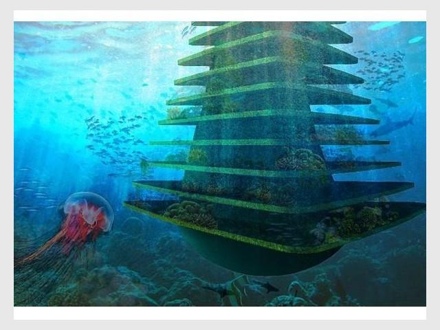 Sea Tree vue sous-marine
