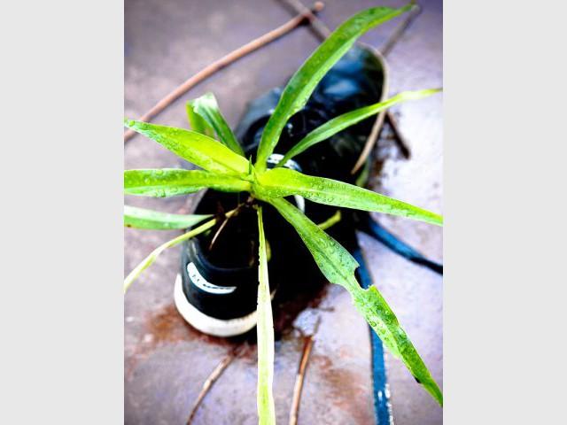Des mini jardins dans des chaussures for Jardin aux plantes