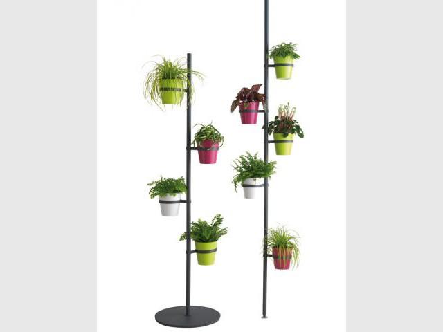 Fleurir son balcon coup d 39 oeil sur les nouveaut s for Caoutchouc plante exterieur