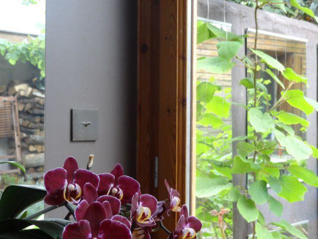 Des miroirs pour prolonger le jardin à l'intérieur - Rénovation bois - Projet Craponne