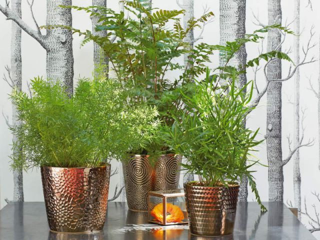 no l des cadeaux v g taux pour les amoureux des plantes. Black Bedroom Furniture Sets. Home Design Ideas