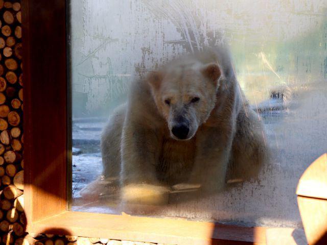 Dormez face aux loups et aux ours polaires for Chambre zoo de la fleche