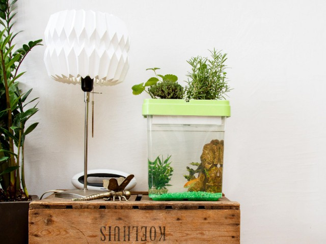Ozarium, l'aquarium avec potager intégré