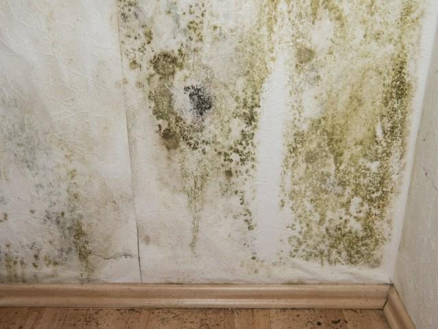 Exemple de mur envahi par les moisissures