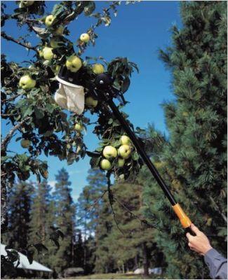 Entretenir son jardin en automne page 6 - Cueille fruit telescopique ...