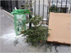 Sapins de Noël : au recyclage !