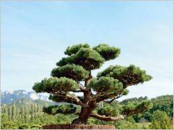 Tout savoir sur la taille des arbres en nuage