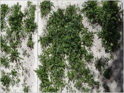 Un mur alliant végétal et céramique