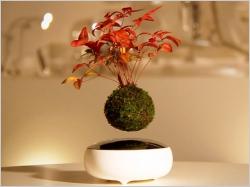 Insolite : Air Bonsaï, une plante en lévitation dans votre salon