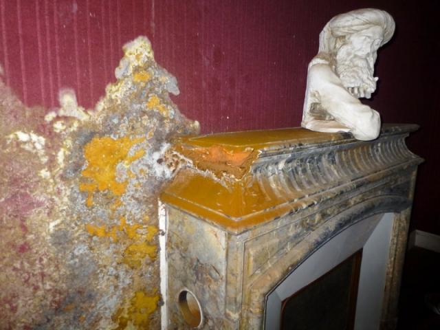 M rules champignons du bois bien r agir pour sauver sa maison - Champignon bois maison ...