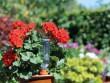 Un cône en plastique breveté hydrate vos plantes en toute autonomie
