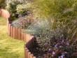 Des billes d'argiles pour nourrir vos plantes facilement à distance