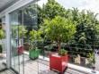 Une terrasse en bois pour cultiver des agrumes