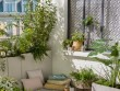 Un rideau de verdure sur mon balcon