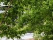 Lalu, Place des Érables