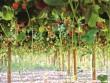 Partage : l'urbanisme agricole, avec les restes, produire,